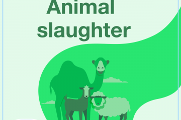 Animal slaughter