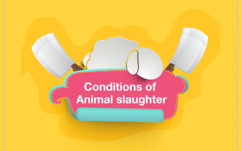 Conditions of Animal slaughter