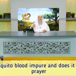 Is Mosquito blood impure and does it impact our prayer?