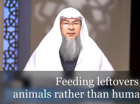 Feeding leftovers to animals rather than humans