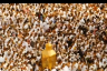 Why Do Muslims Perform Pilgrimage (Hajj)